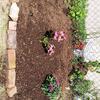 perennials, meet soil