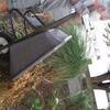 fresh hostas, fresh mulch