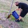 elixir for troubled trees