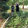 Adult and child pulling dead tree branch