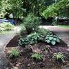 Plants in garden bed