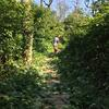 knocking back the knotweed jungle