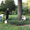 Planting and watering ground cover