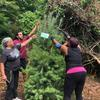 Planting pine tree