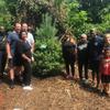 Volunteers with pine tree