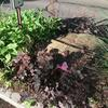 Cleaned median garden bed