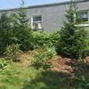 Garden bed that has been weeded