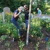 Volunteers digging holes in a garden bed