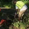 Volunteers cleaning median bed