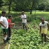Kids working in raised garden beds