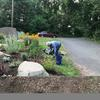 Planting plants in garden bed