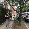 Pruning street trees