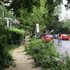 Volunteers pruning tree