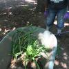 Weeds in a barrel