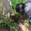 A volunteer weeding