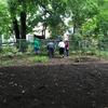 Spreaded mulch and volunteers gardening