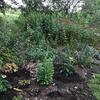 New plants in garden bed