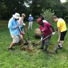 Planting tree at Beaver Bonds park