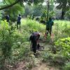 Planting shrubs in park