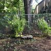 Newly planted greenery