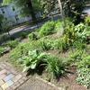 Plants in clean garden bed