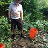 planting willow cuttings