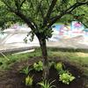 Plants around a tree with new mulch