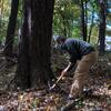 Removing invasives at the Botanical Gardens of Healing
