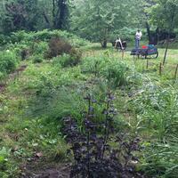 Planted shrubs at Edgewood