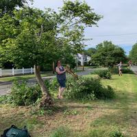 Volunteer pruning a tree