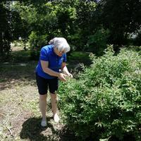 Woman looking at bush