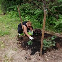 Annemarie Rivera spreading compost around perennials.