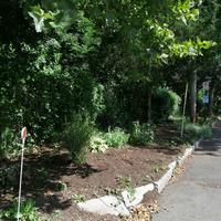 Weeded and mulched section of Bradley Street Greenspace.