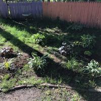 New plants at Watson and Bassett