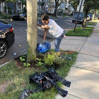 Volunteer watering tree