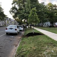 Tree planed in Chatham Square on a street