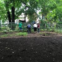Spreaded mulch and volunteers gardening