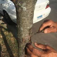 Image of hands on a tree