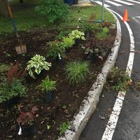 New plants in the roundabout
