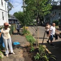 Tree planting on street