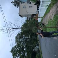 Volunteer with pruned tree