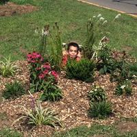 Little boy in flower bed