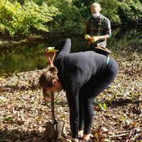 Removing invasives along the West River