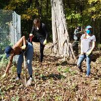 Removing invasives at the Botanical Gardens of Healing